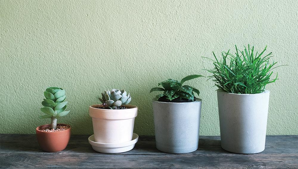 식물 인테리어